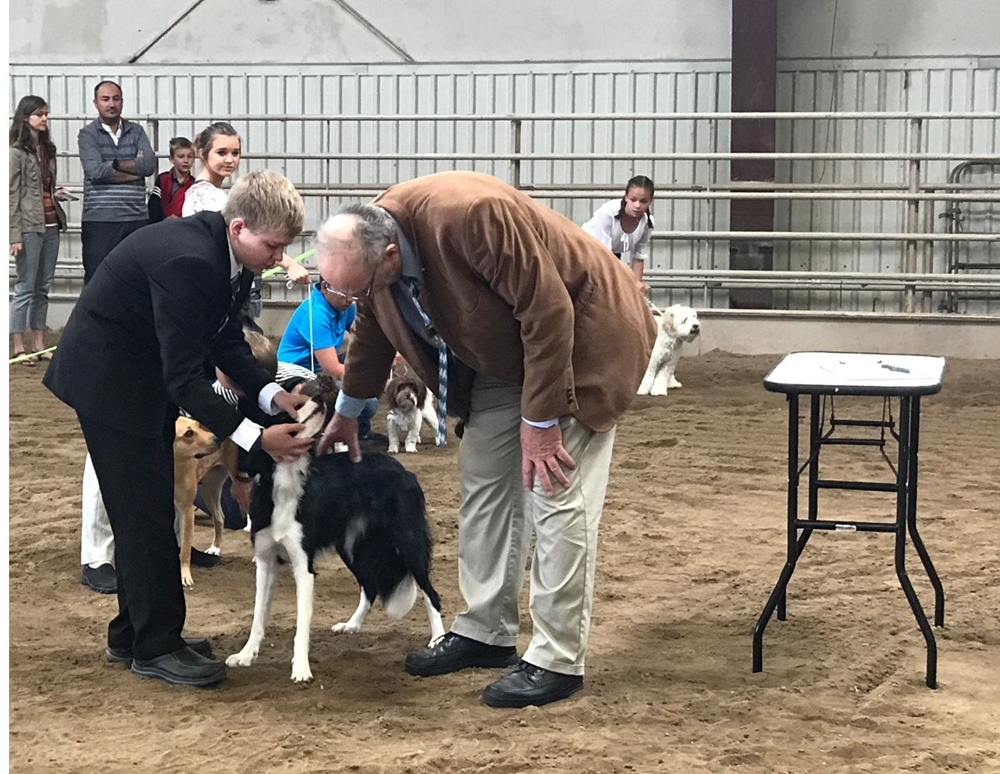 A boy is presenting his Border Collie to a judge for inspection