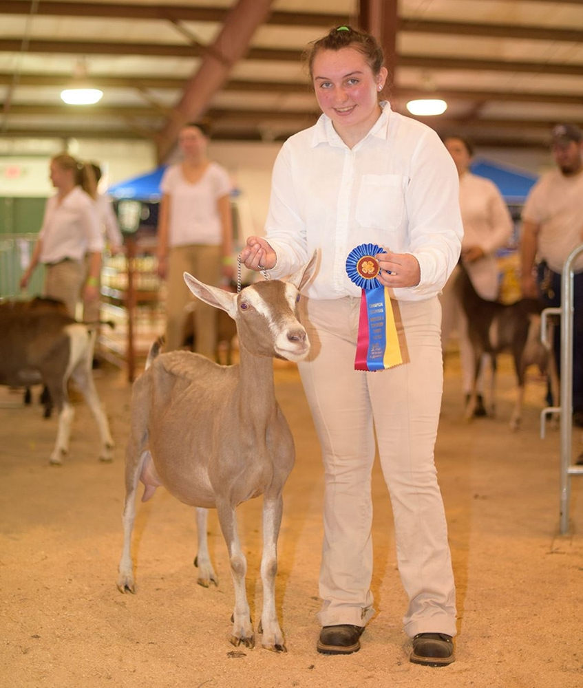 Champion Showman of Goats