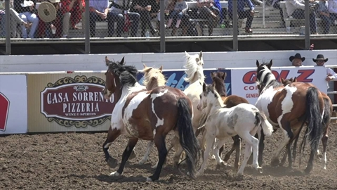 2016 California Rodeo Salinas Highlights