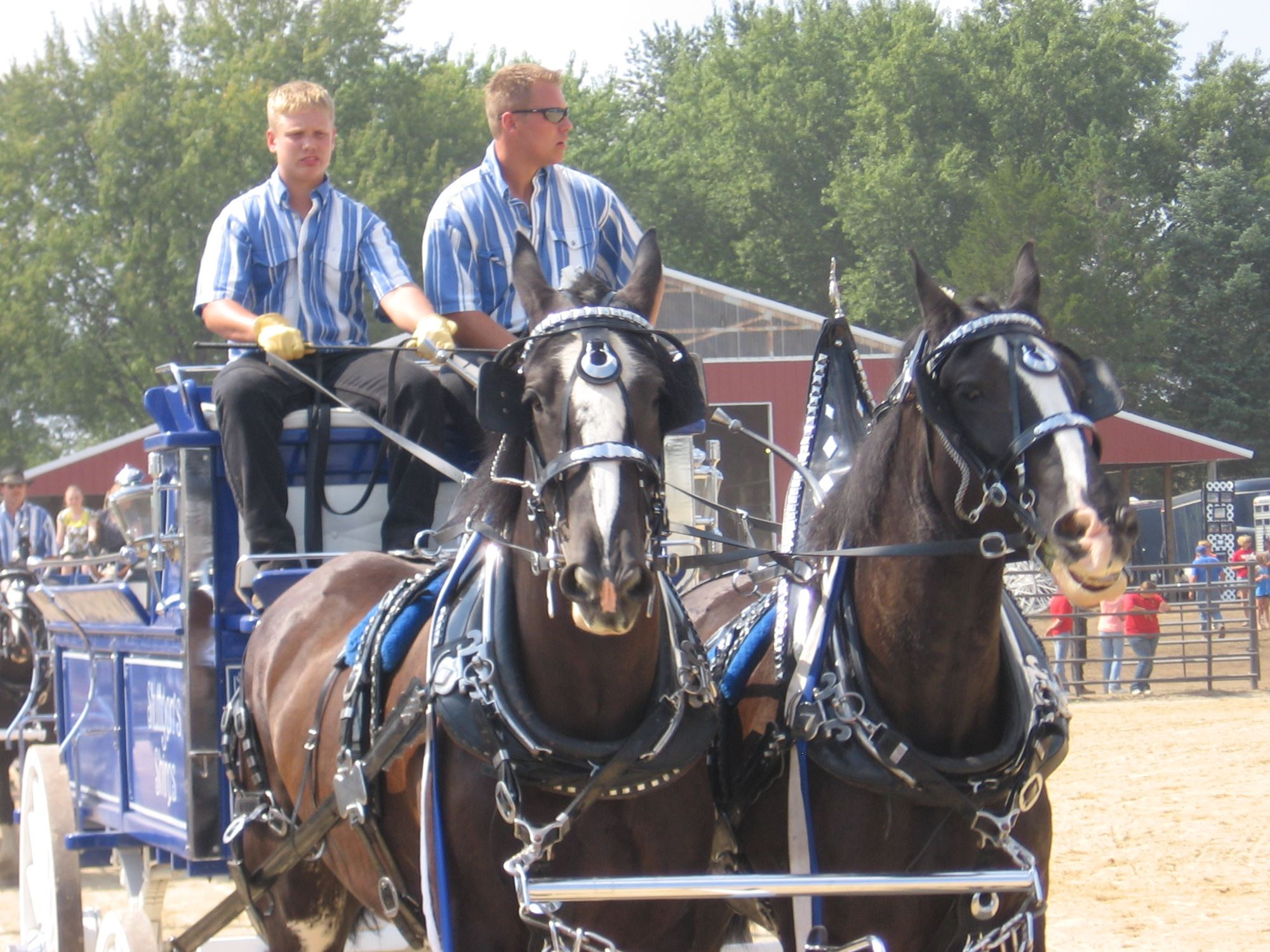 CWSF Draft Horse Show