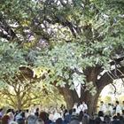 Stonebridge Wedding & Event Center