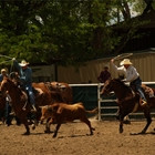 AQHA Team Roping & Ranching Heritage Team Roping/Barrel Race Event