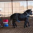 Draft & Mule Challenge