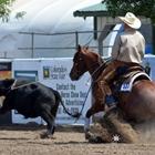 AQHA Ranch Versatility