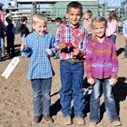 Mutton Bustin' 5-6 Year Olds: