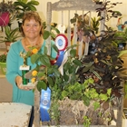 1st Place DIsh Garden