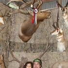 Best Elk