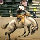 Rodeo Cowboy in Conroe, Texas