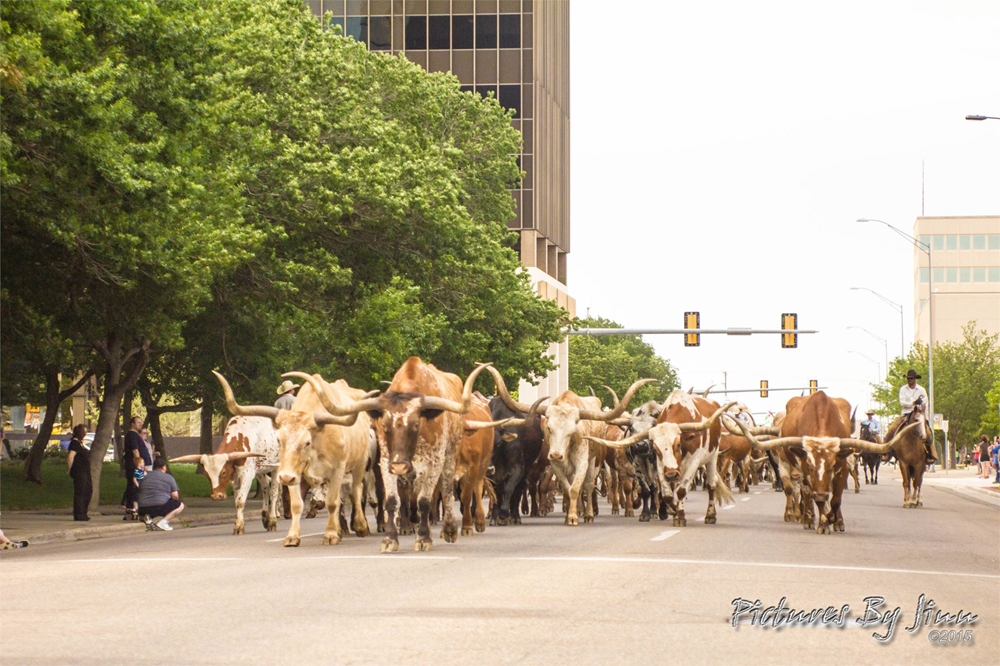 2015 Coors Cowboy Club Cattle Drive