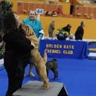 2019 Golden Gate Kennel Club's Dog Show