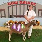 Jr Livestock Show