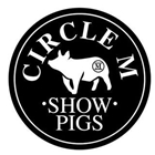 Circle M Show Pigs