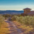 a dirt road in an olive field with a stone house and a scenic vista of the hill country