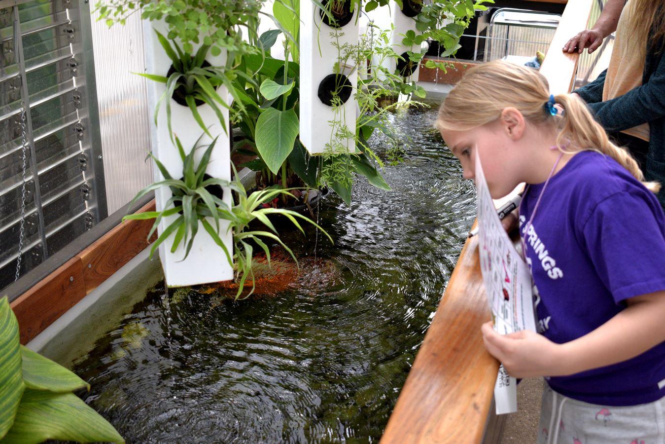 A child examining an aquaponics garden.