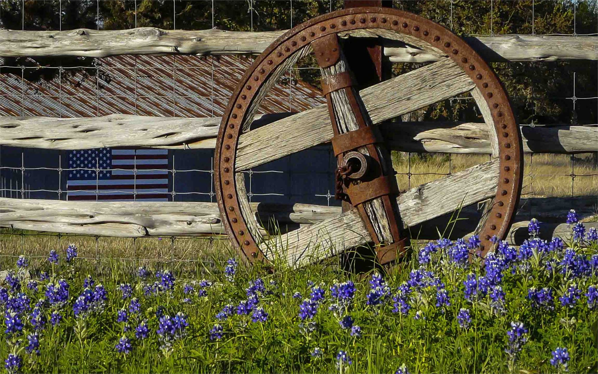 An antique wagon wheel propped against a wood fence in a field of bluebonnets