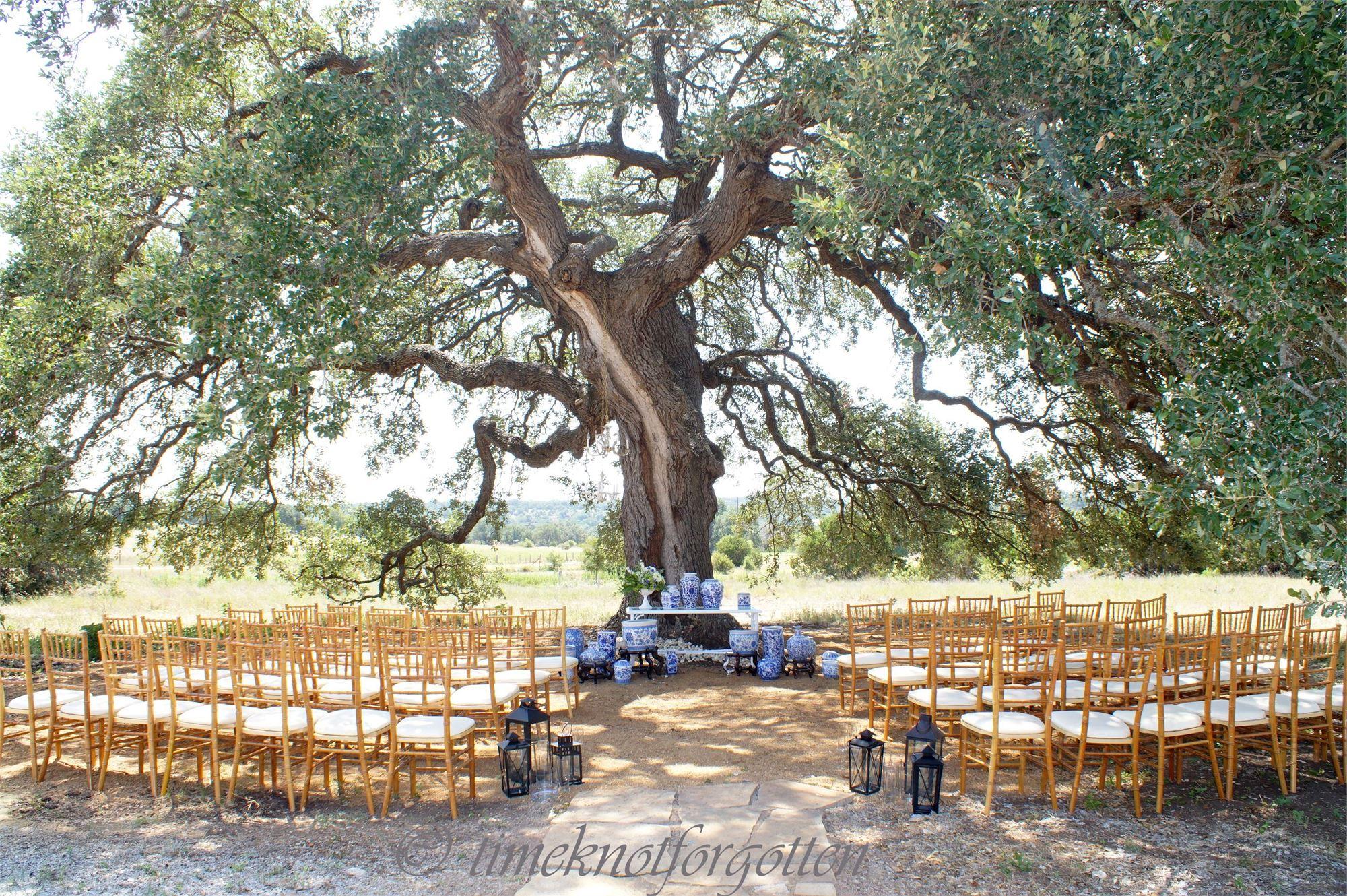 A wedding ceremony set up beneath an oak tree