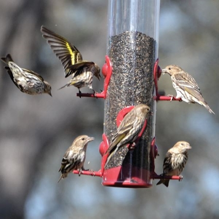 A variety of birds eating at a feeder.