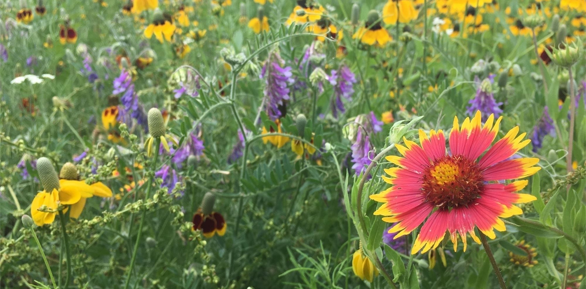 a field of brightly colored wildflowers