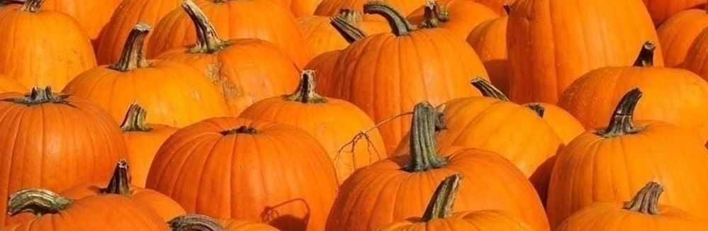 several big orange pumpkins