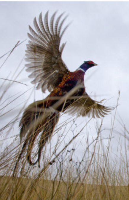 Participate in our Dickinson, ND hunting photo contest !