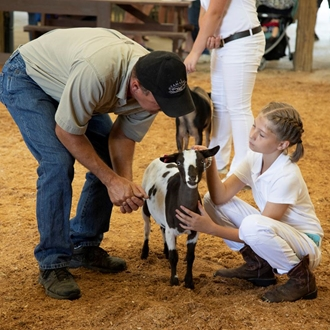 Photo of 4-H & FFA Dairy Goat Show with girl sitting next to her goat
