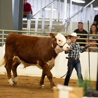 Photo of the market steer & prospect steer show