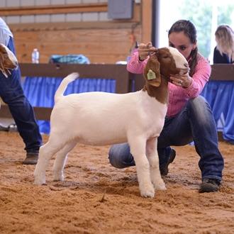 ABGA Meat Goat