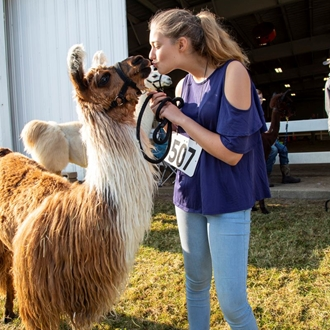 Photo of a girl kissing he llama