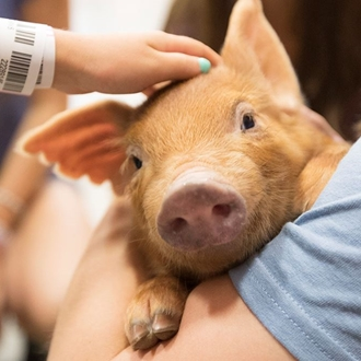 Photo of a piglet