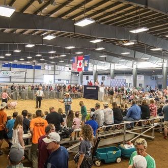 Photo of Youth Livestock Judging Contest