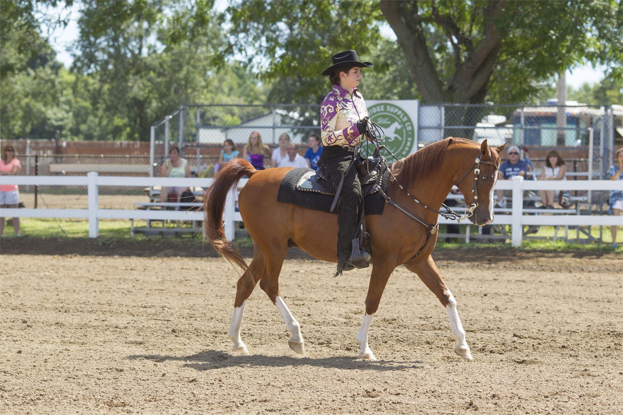 Open Horse Show