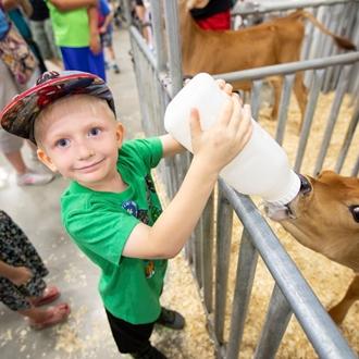 photo of help feed a calf