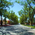 Avenue of the Governor's