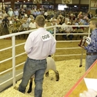 Jr. Livestock Auction
