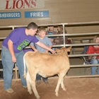 Jr. Livestock Volunteers