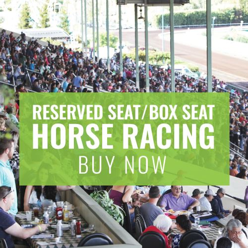 Horse Racing Box Seat