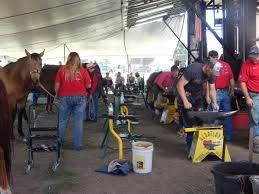 Live Shoeing