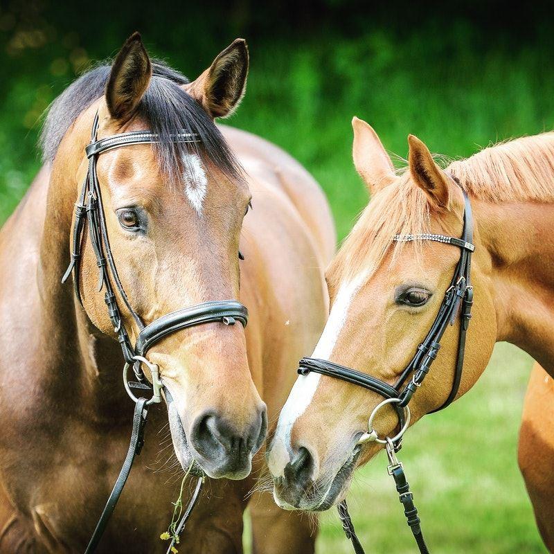 Horse Exhibitors