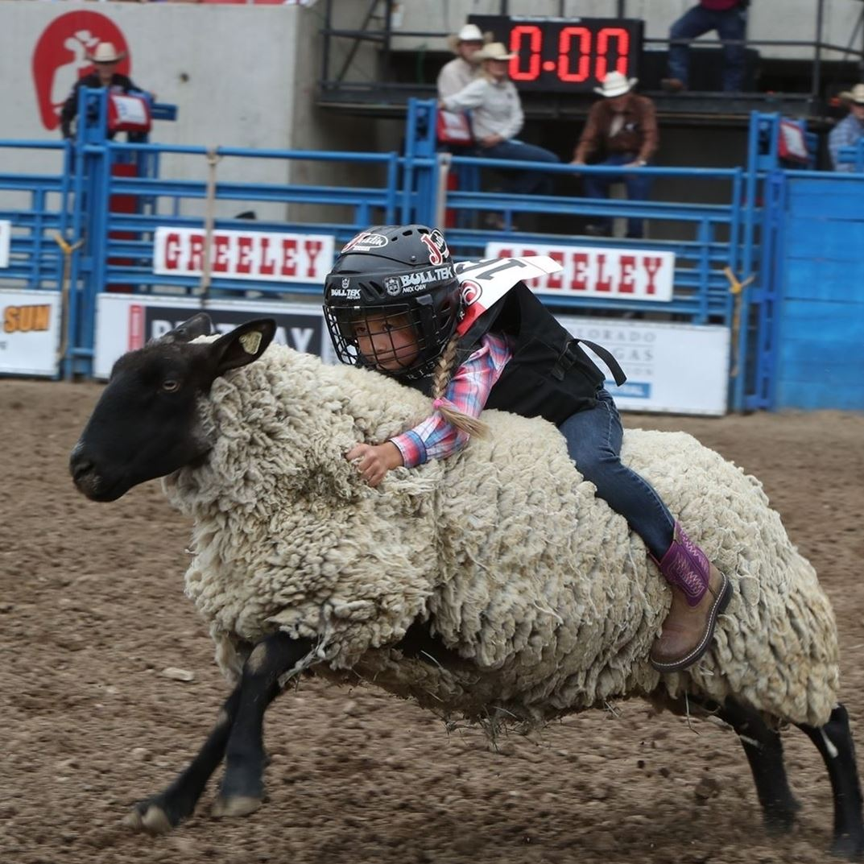 Sheep Stampede