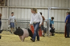 Girl with her pig in the pig show