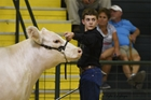 Boy in cattle show with white cow