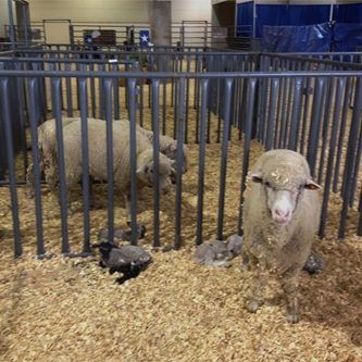 2013 HEART O' TEXAS FAIR & RODEO ALL NEW BIRTHING  CENTER GIVES NEW LIFE TO AG EDUCATION