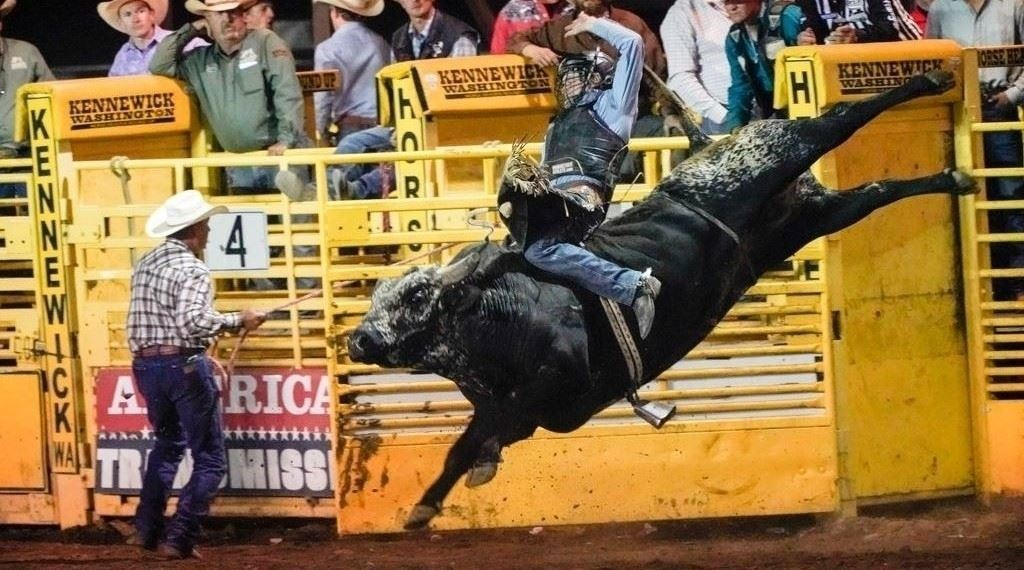 Bull rider coming out of the chutes