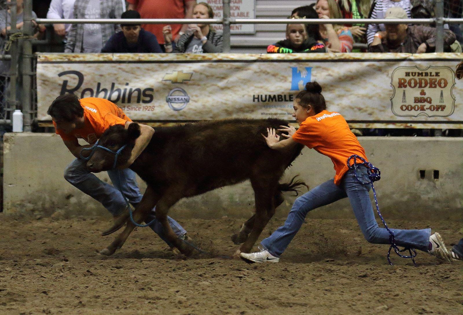 Calf Scramble