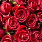 """<a href=""""#pasadena"""">Celebrate The Pasadena Tournament of Roses</a>"""
