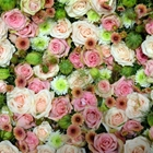 "<a href=""#philadelphia"">The Ultimate Philadelphia Flower Show Experience</a>"