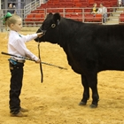Youth Livestock Shows