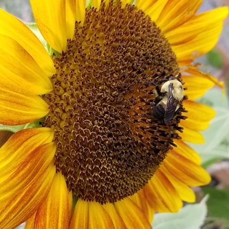 """Kansas State Fair to have """"Pollinator Party"""" June 23"""