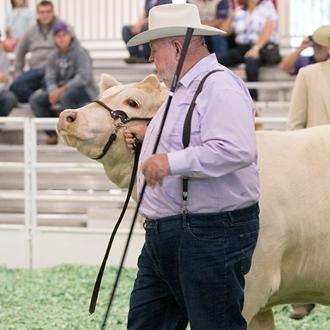Livestock shows 2018