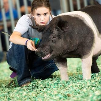 Youth Swine Show 2017